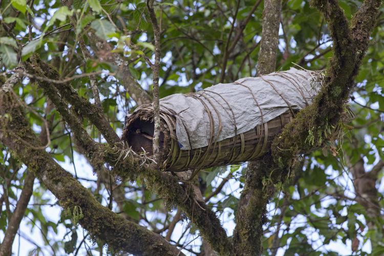 Harenna bee hive