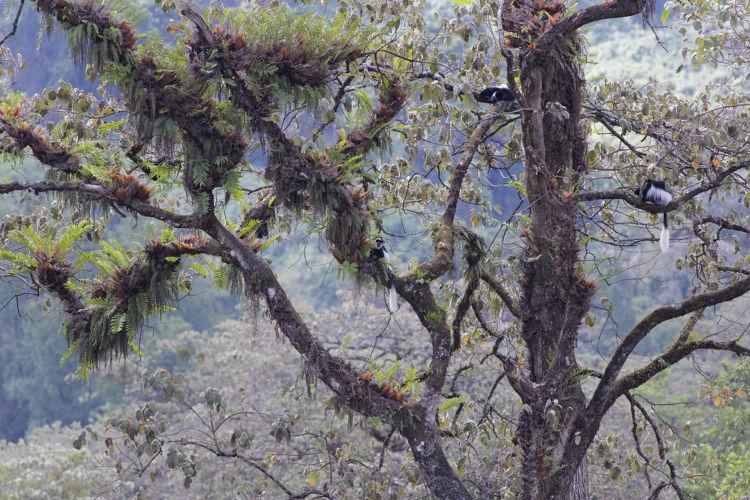 Harenna Forest