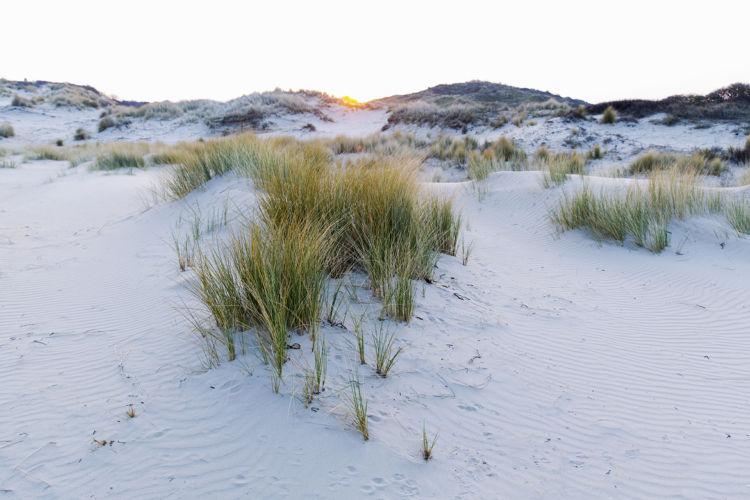 Helmduinen witte duinen