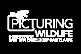 Wildlife photography by Bart van Engeldorp Gastelaars